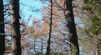 Il Comune di Castiglione della Pescaia invita tutti i proprietari di terreni con pinete colpite dall'infestazione del parassita Matsococcus Feytaudi a scrivere al dirigente dell'Ufficio Ambiente entro la prima settimana […]